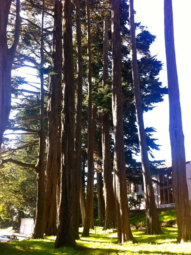 Cavallo Point Trees