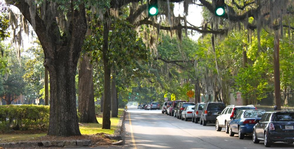 Oak Trees On Liberty Street Savannah