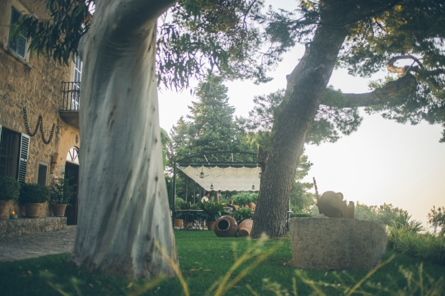 Sa Pedrissa Trees