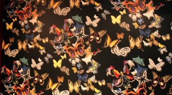 Seasons Amsterdam Butterflies