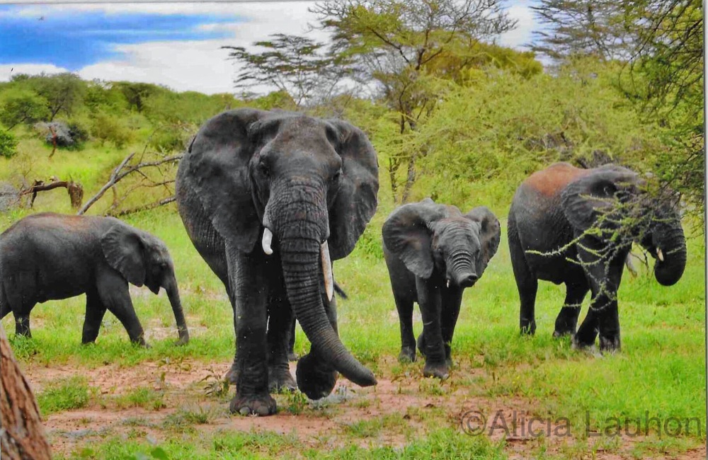 Family of Elephants Serengeti National Park Tanzania